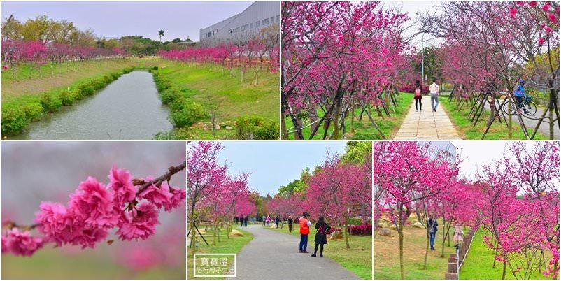 台中賞櫻花景點》后里崴立機電櫻花公園免費開放、河津櫻花步道盛開綻放好美麗