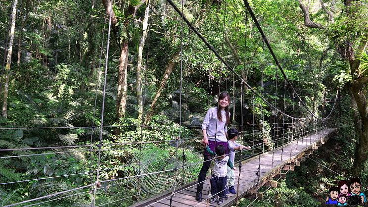 《 新北市森林步道 》三峽大板根森林遊樂區 全台唯一亞熱帶雨林步道 賞螢火蟲 桐花