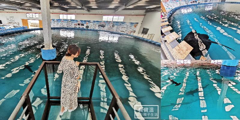 宜蘭礁溪親子景點 |  金車生技水產養殖研發中心,看海洋生物水族館,新增空中景觀台鯊魚就在腳下