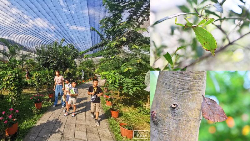 花蓮免費親子景點》亞泥生態園區. 最大蝴蝶園、偽裝專家竹節蟲,通通免費看,還有專人導覽