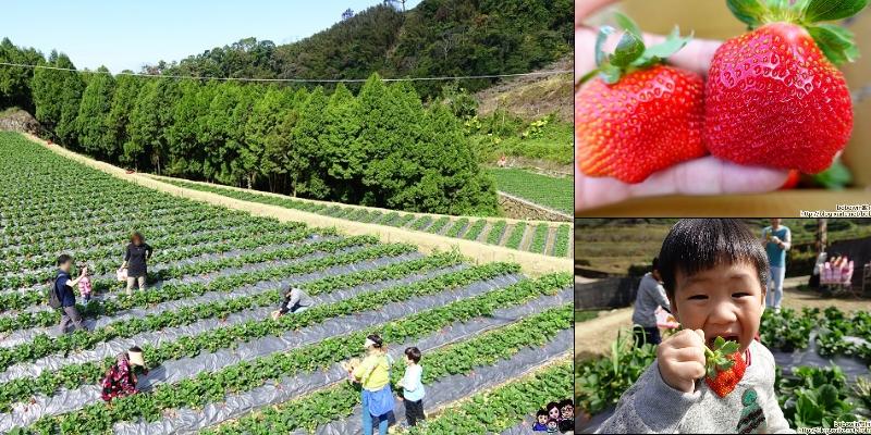 《 苗栗私房採草莓景點 》苗栗馬拉邦山金鑽草莓園~紮實口感、一吃就上癮 (2020~2021已經開放採草莓)