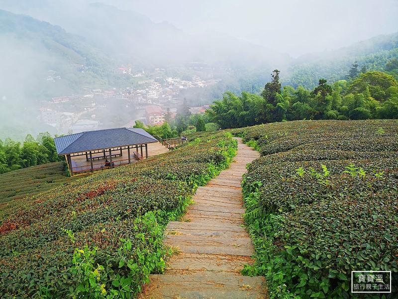 嘉義梅山步道輕鬆走》雲之南道茶園步道,漫步太平雲梯茶園步道,串聯太平老街