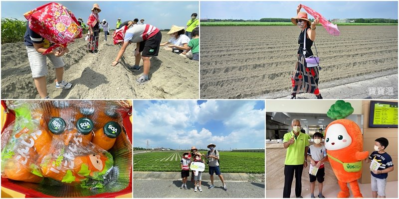 雲林VDS活力東勢 | 胡蘿蔔親子體驗,呼朋引伴來田裡種蘿蔔, 120天後寄到你家去