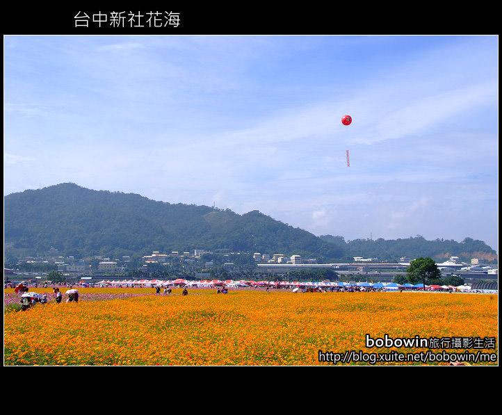 [ 台中好玩 ] 2010台中新社花海~樂活99好心情