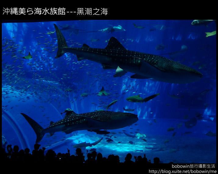 [ 日本 ] 沖繩自由行part3–海洋博公園