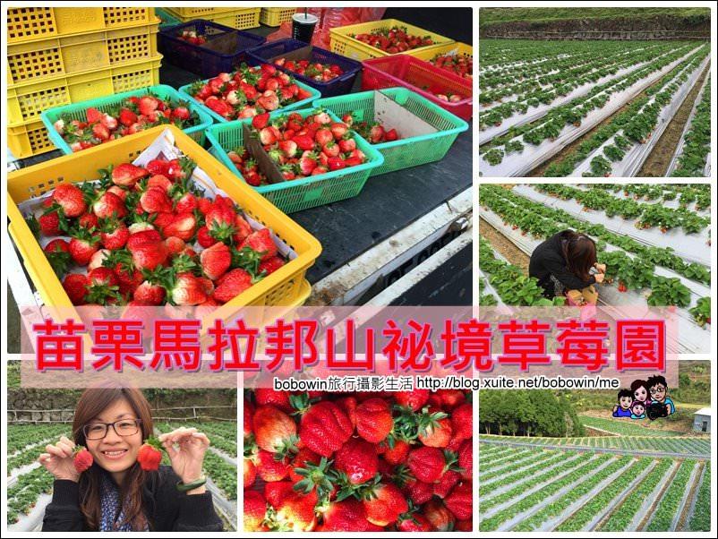 封面.jpg - 苗栗馬拉邦山採草莓