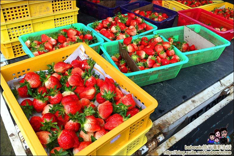 IMG_7209.JPG - 苗栗馬拉邦山採草莓