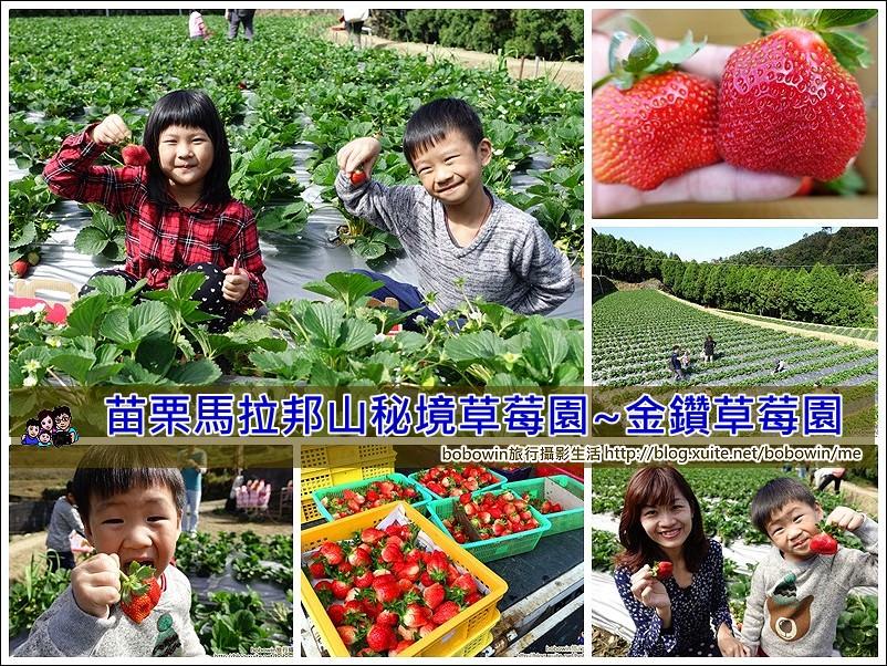 《 苗栗私房採草莓景點 》苗栗馬拉邦山採金鑽草莓~紮實口感、一吃就上癮 (2017年新品種上市、草莓更大顆)
