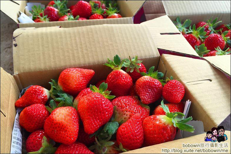 IMG_4277.JPG - 苗栗馬拉邦山採草莓