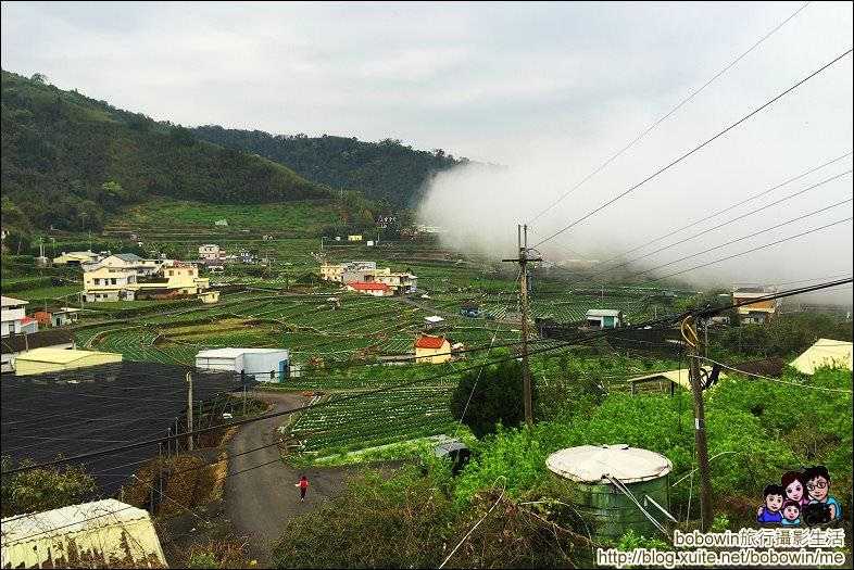 IMG_7202.JPG - 苗栗馬拉邦山採草莓