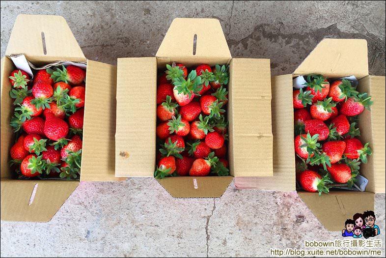 IMG_4268.JPG - 苗栗馬拉邦山採草莓