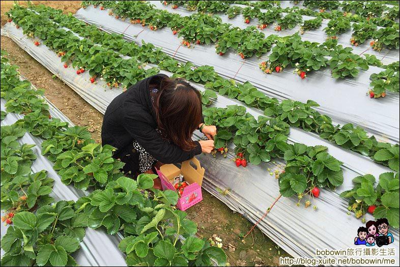 IMG_4232.JPG - 苗栗馬拉邦山採草莓