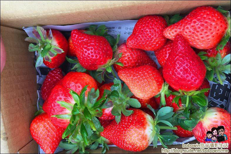 IMG_4253.JPG - 苗栗馬拉邦山採草莓