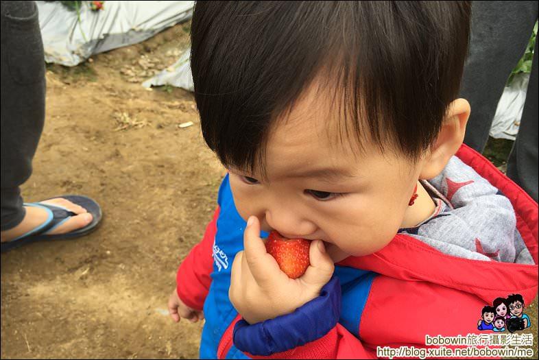 IMG_4265.JPG - 苗栗馬拉邦山採草莓