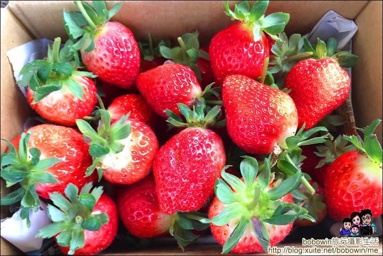 IMG_4270.JPG - 苗栗馬拉邦山採草莓
