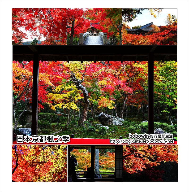 《 日本賞楓最前線 》京都楓葉資訊分享 (含日本全國楓葉資訊)