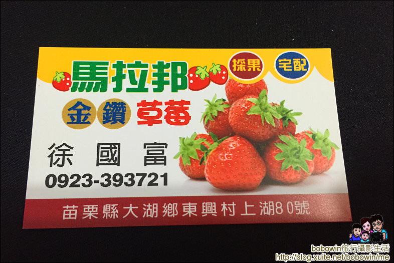 IMG_7247.JPG - 苗栗馬拉邦山採草莓